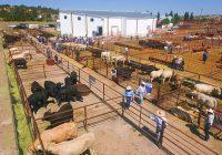 Llega a Guerrero la venta de sementales subsidiados