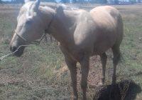 Lo agarraron luego de que se robara un caballo