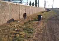 Avanza programa integral de limpieza en Cuauhtémoc