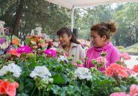 Casi 15 mil has producen flores para el Día de la Madre